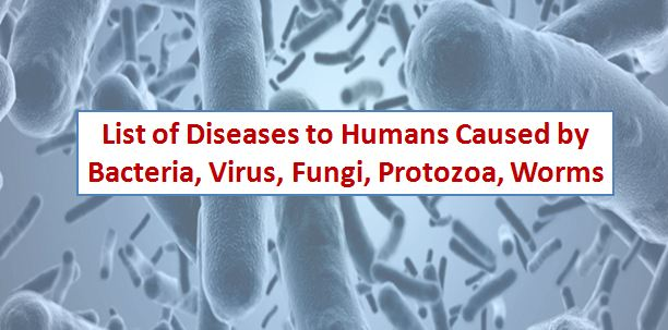 list of human diseases caused by bacteria and viruses pdf